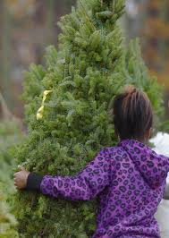 Griswold Christmas Tree Farm by Whitechristmastree Club Page 190