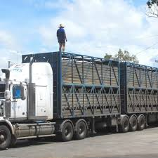 New Owners For Qld Livestock Haulage Firm - Beef Central Welcome To Ranch Trucks Trailers Cattle Bodery Wilson Livestock Pinterest Cars New Ud For Sale Vcv Rockhampton Central Queensland The Trucknet Uk Drivers Roundtable View Topic Gilders Pin By Larry Murray On Cattle Trucks Mini For Suzuki Mitsubishi Daihatsu Subaru Mazda 12002 Road Train Highway Replicas Transport Vehicles Horsezone Page 1 Newark Scanias Geary Operation Arod Redneck Lewis Family Farm Deraad Trucking