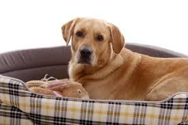 hundebett welpen schlafen so besonders gut insidertipps