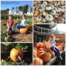 Studts Pumpkin Patch Grand Junction by Mooreton Pumpkin Patch Draws Kids In Time For