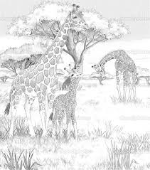 Safari Giraffe Coloring Pages For Adults 114