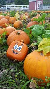 Pumpkin Patch Cal Poly Pomona by Cal Poly Pomona Pumpkin Festival California Haunted Houses