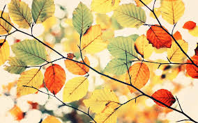 Autumn Colors Wallpaper Group With 54 Items