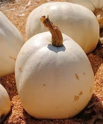 Cinderella Pumpkin Seeds Australia by 10 Easy Pieces Best Pumpkins Gardenista