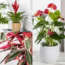 zimmerpflanzen set rotes wohnzimmer