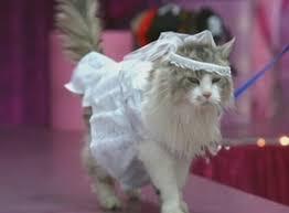 cat wedding dress anchorman the legend of burgundy 2004 cinema cats
