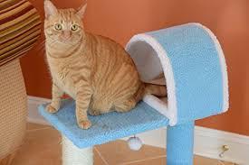 Armarkat Cat Bed by Armarkat Cat Tree Model B2903 Sky Blue U2013 Purrfect Cat Breeds