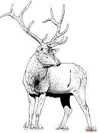 Click The Gorgeous Elk Deer Coloring