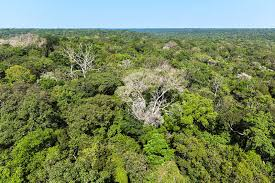 amazonia si e social domino effect in the amazon rainforest tum
