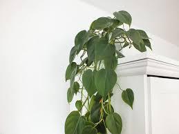luftreinigende pflanzen raumklima verbessern