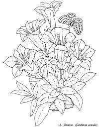 Coloring Pages Flowers Beautiful Book