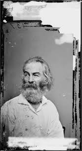 Walt Whitman The Wound Dresser by 121 Best Walt Whitman U0026 Peter Doyle U0026 The Nash Families Images On