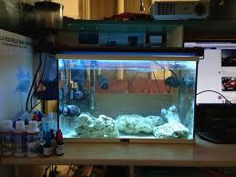débutante démarrage nano aquarium 60l eau de mer