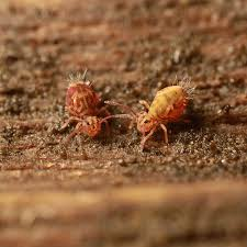 Kill Springtails In Bathroom by How To Get Rid Of Silverfish U2013 How To Get Rid Of Stuff