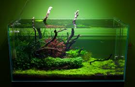 Spongebob Aquarium Decor Amazon by Reddit Top 2 5 Million Plantedtank Csv At Master Umbrae Reddit