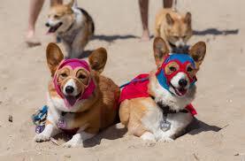 90th Anaheim Halloween Parade by Best Things To Do Anime Expo Ball Corgi Beach Day