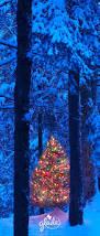 Ceramic Christmas Tree Bulbs Canada by Best 25 Blue Christmas Lights Ideas On Pinterest Blue Christmas