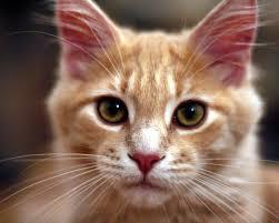 orange cat names orange cat names purrfect cat names