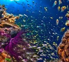 les récifs coralliens s exposent à l aquarium tropical de la porte