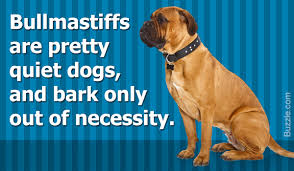 Dogs That Dont Shed Too Much by Guard Dogs That Don U0027t Shed How Many Do You Know