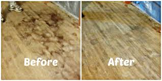 Restain Hardwood Floors Darker by How To Remove Pet Urine Stains From Hardwood Floors Youtube