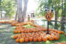 Pumpkin Patch Fresno Ca Hours by Halloween Attractions In Bakersfield In 2017 C A Reding Company
