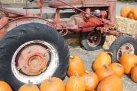 Pumpkin Patch Medford Oregon by White U0027s Country Farm Fall Festival Fun Jacksonville Review Online