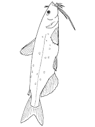 Catfish Coloring Pages 17
