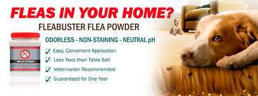 Fleas Hardwood Floors Borax by How To Kill Fleas In The House Best Ways Tips And Products To