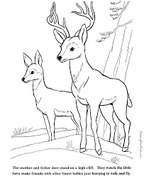 Deer And Fawn Coloring Pages To Print Color