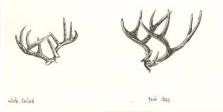 Full Size Of Coloring Pagebreathtaking How To Draw Antlers Lsb8rg0 Page Captivating