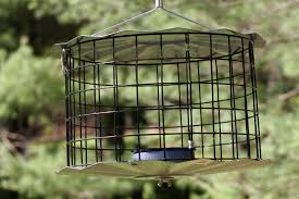 MEALWORM FEEDERS ANY TIME OF YEAR