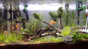 Belog Sape Ni?: Aquascaping/Planted Aquarium, Hang Nak Tengok Ikan ... 329 Best Aquascape Images On Pinterest Aquarium Ideas Floratic Visiting Paradise At Shah Alam Planted Aquarium Aquascape Things Aquariums Aquascaping Malaysia Diy Pertama Kali Aquascaping October 2010 Of The Month Ikebana Aquascaping World Sumida Aquarium Reloaded Fish Tanks And Designs Awesome A Moss Experiment Its All About Current Low Tech Tank Cuisine Wonderful Small Cubical Styles Planted The Surreal Submarine Amuse
