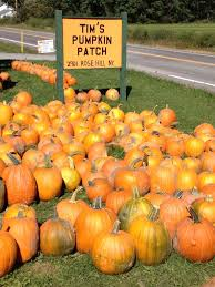 Pumpkin Patch In Long Island New York by 45 Best In And Around Marcellus Ny Images On Pinterest Finger