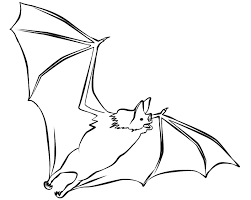 Realistic Bat Coloring Pages Flying