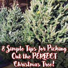 Frasier Christmas Tree by 8 Tips For Picking Out The Perfect Christmas Tree Minneapolis