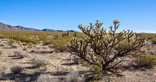 Tule Springs Fossil Beds National Monument by Mojave Desert Blog