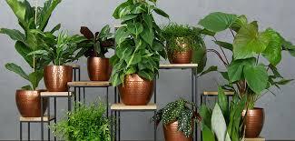 123zimmerpflanzen zimmerpflanzen und pflanzgefäße