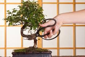 bonsai minibäumchen für zuhause schöner wohnen