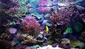 eclairage led pour aquarium eau de mer alpheus eclairages a led hautes performances pour aquariums et