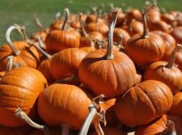 Pumpkin Patch Church Tallahassee by Halloween Happenings News Panama City News Herald Panama