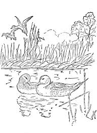 New Nature Coloring Pages Gallery Kids Ideas