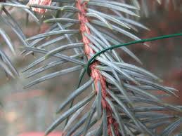 Aspirin For Christmas Tree Life by Tree Care Tips To Make Your Holiday Shine Diy Network Blog Made