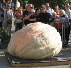 Heaviest Pumpkin Ever by 2014 Beni Meier And His 2323 7 Pound World Record Giant Pumpkin