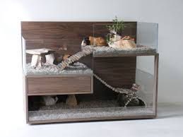 Can Guinea Pigs Eat Salted Pumpkin Seeds by Guinea Pigs The Perfect Pet Repurposed Dresser And Hedgehogs