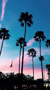 Quite Demure California SunsetCalifornia TumblrMalibu Palm TreesSummer