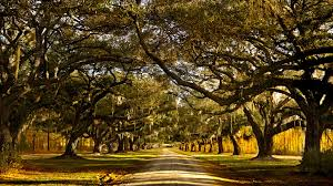 100 Brays Island Wallpaper Plantation South Carolina Trees