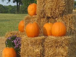 Kent Farms Pumpkin Patch by Fall Into Family Fun In Richmond