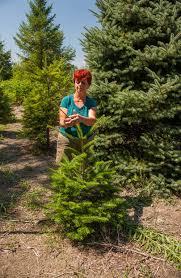 Christmas Tree Shop Middletown Ri by Season Two U2014 Caserta Productions