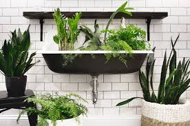 Good Plants For Windowless Bathroom by Three Plants That Thrive In Low Light Bathrooms